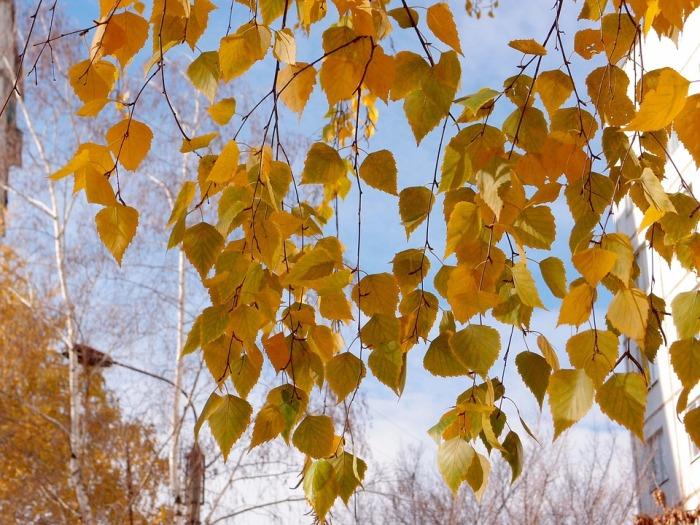 leaves-1036560_960_720