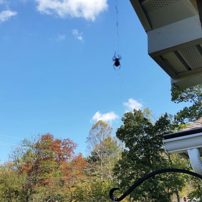 spider guest