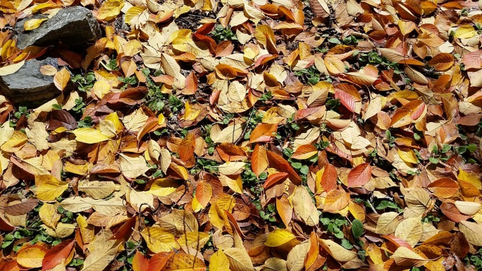 quilt of leaves